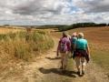 8/8/18. Aldworth - walking on the Berkshire Downs.