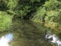 The River Pang