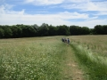Open Kent countryside...