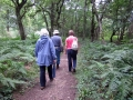 12/8/17 Paices Wood, Aldermaston